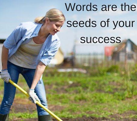 website content - seeds of success